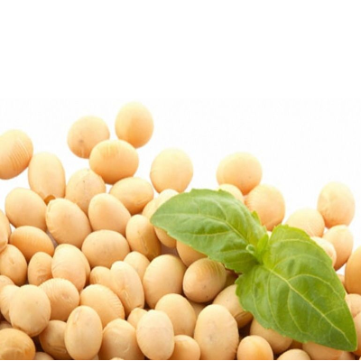 Soja-Protein